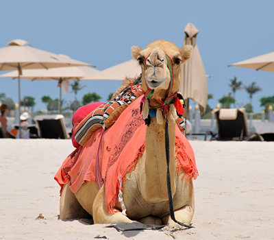 Emirates Palace - Camel